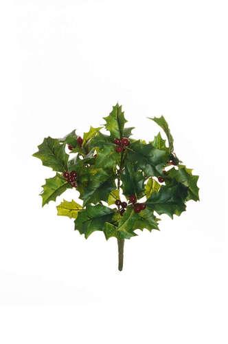 Agrifoglio Verde H 20 cm
